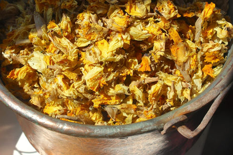 Pot of daffodils for natural dyeing by Juniper & Bliss