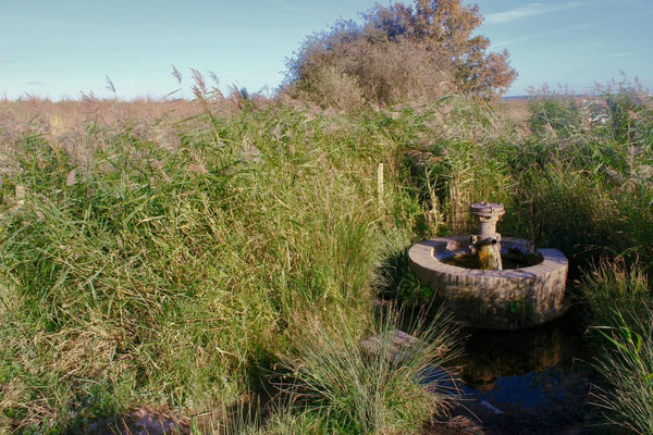 Natural Spring in Oare Marshes used for natural dyeing by Juniper & Bliss