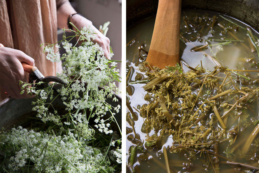 Preparing natural dye with cow parsley for Juniper & Bliss pieces for ethically made sustainable fashion and interior design