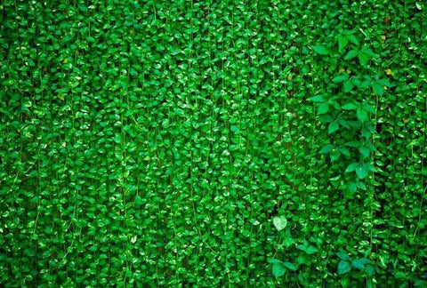 Green Leaves Wall Photo Booth Backdrop G-592