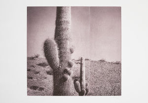 Silvi Glattauer - In the Shade of a Cactus IV