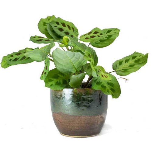 [Best Selling Healthy Indoor Plants & Plants Accessories Online]-Leaf & Co Studio
