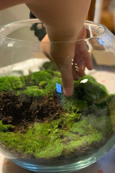 Terrarium Making • Event