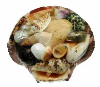Natural Hermit Crab Shell Pack with Sea Sponge