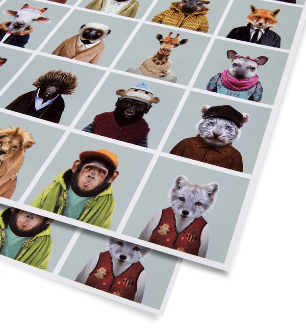 Zoo Portraits Gift Wrap
