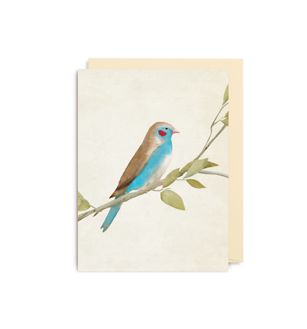 Red Cheeked Cordon Bleu Finch Mini Card