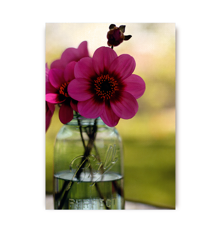 Dahlias In A Blue Jar Postcard