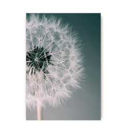 Dandelion Dream - Lagom Design