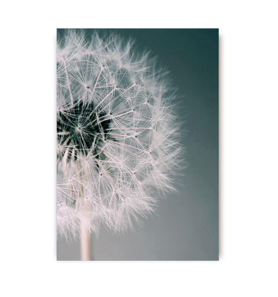 Dandelion Dream Postcard