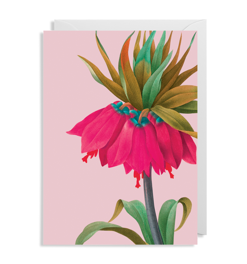 Pink Crown Imperial - Lagom Design