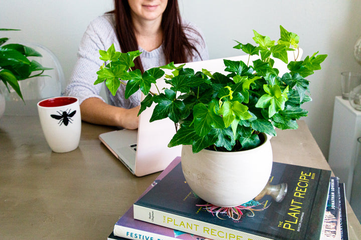 GET INSPIRED: Flowers + Plants for Your Desk