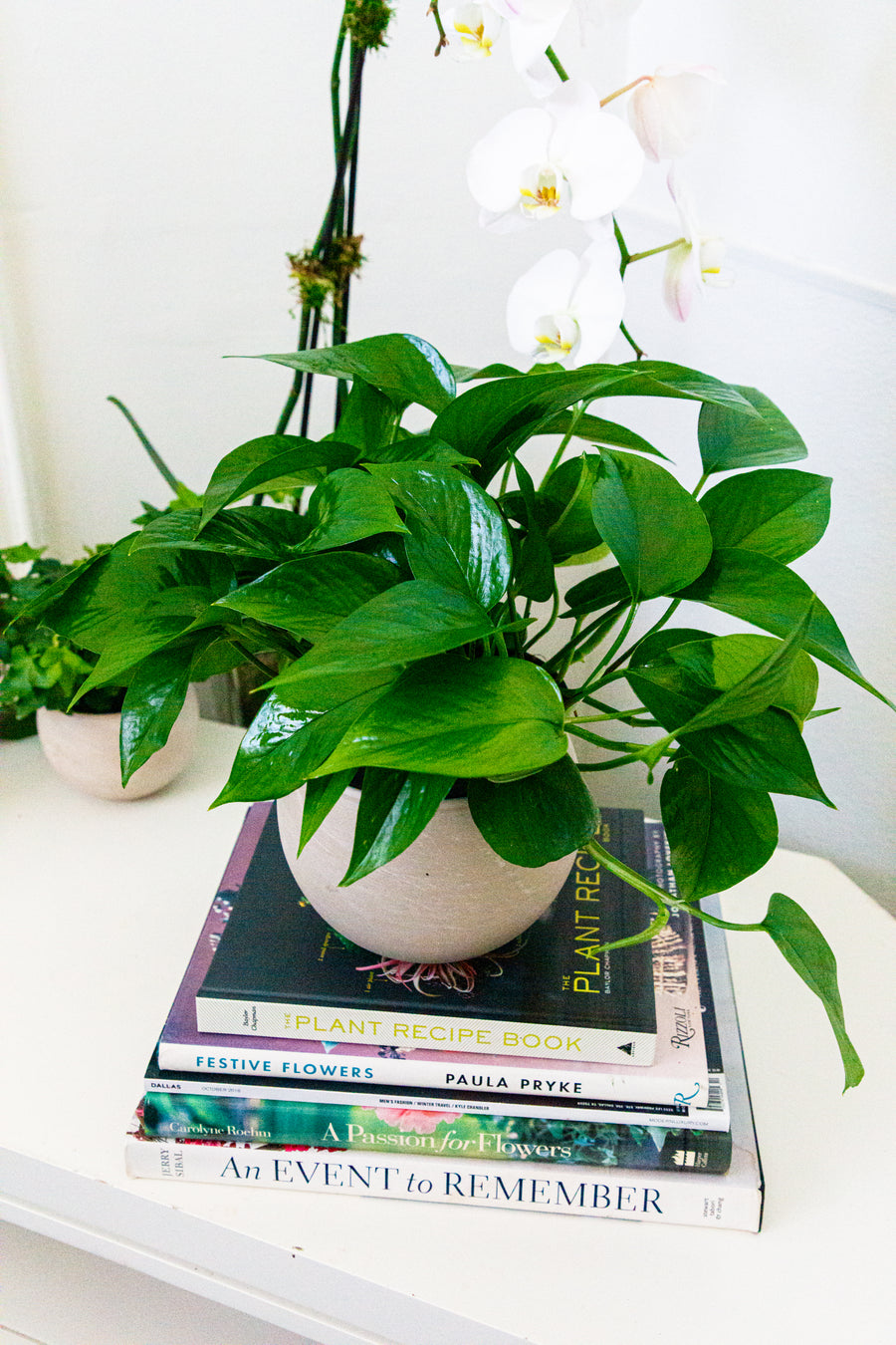 The Philodendron | Local Plants - Lizzie Bee's Flower Shoppe