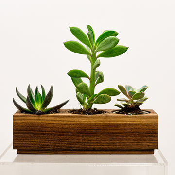 Succulent Walnut Handmade Planter | Green Plant - Lizzie Bee's Flower Shoppe