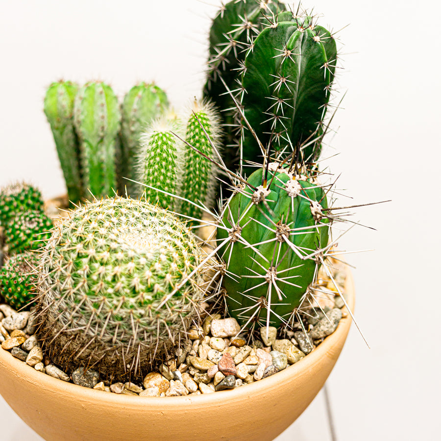 Cactus Dish Garden | Local Plants - Lizzie Bee's Flower Shoppe