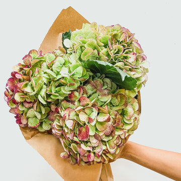 Grab & Go Bouquets | Grab+Go Special - Lizzie Bee's Flower Shoppe
