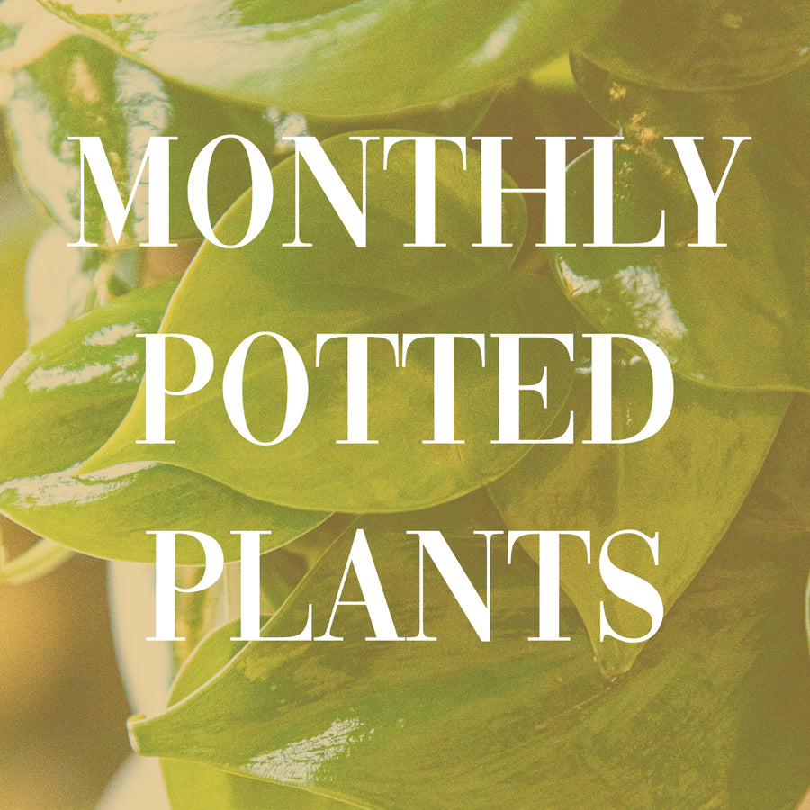 Monthly Plant Subscription - 3 MONTH SUBSCRIPTION | Monthly Plant Subscription - Lizzie Bee's Flower Shoppe