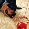 USA-K9 Cherry Bomb Durable Rubber Chew Toy, Treat Dispenser, Reward - Toys For A Pet