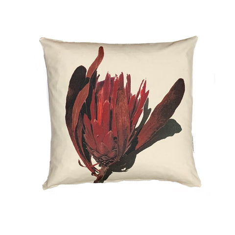 Red Protea - Cushion Cover