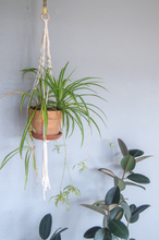 Load image into Gallery viewer, DIY Macrame Kit for Hanging Planters. Set It Down and Macrame. Comes in Small and Medium