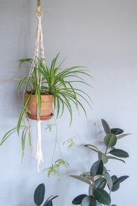 DIY Macrame Kit for Hanging Planters. Set It Down and Macrame. Comes in Small and Medium