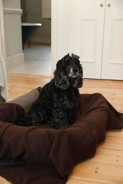 dog-sitting-in-dog-bed