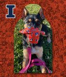 University of Illinois - Official Fan Cutout