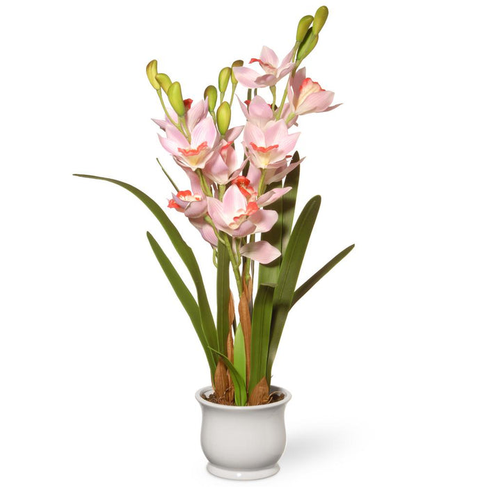 Potted Light Pink Orchids