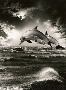 500 piece Dolphin puzzle- image made by HAG Photography