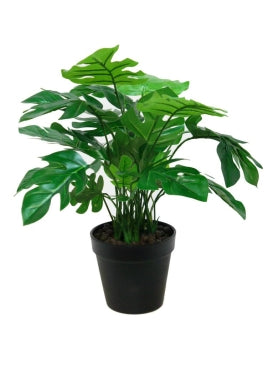 Monstera With Pot - 45cm