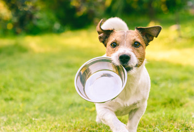 Insect-Based Dog Food: A Trendy Fad or Here to Stay?
