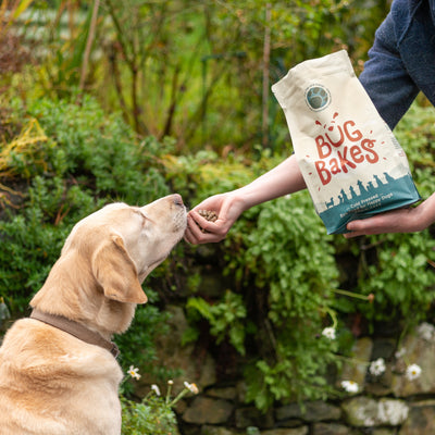 8 Benefits of Switching to Cold-Pressed Dog Food