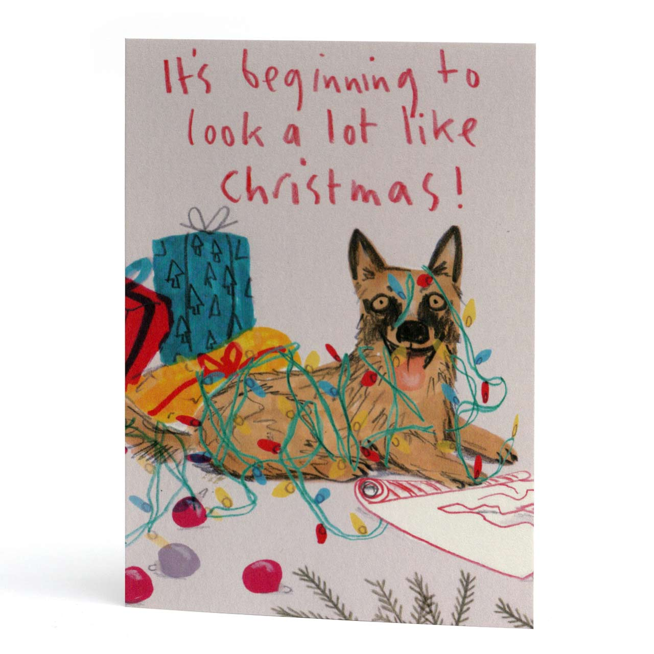 It's Beginning... Dog Christmas Card