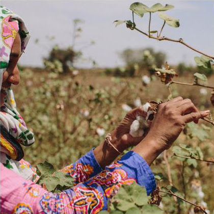 woman holding cotton in the fields