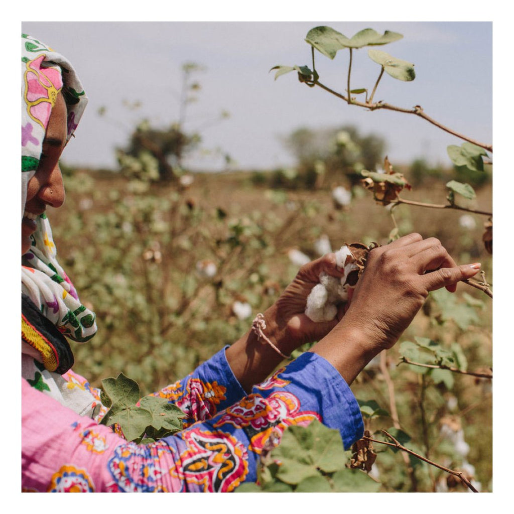 picking cotton in a field in India
