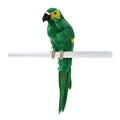 Green Tropical Bird Parrot Decorations