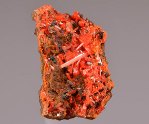 Crocoite from Red Lead Mine, Zeehan, Tasmania, Australia