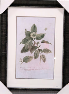 Turnera Ulmifolia Painting