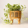 """Tropical Plant Stand (12.5"""")"""