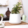 Matte White Porcelain planter with drainage plate