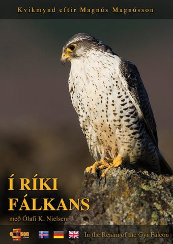 In the Realm of the Gyr Falcon (Í ríki fálkans) (DVD) - ISLANDICA.com
