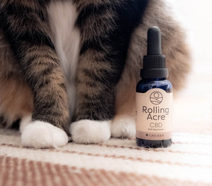 1000mg CBD Oil for Pets