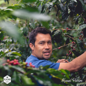 Honduras: Finca la Concepcion - notes of guava, pear and honey