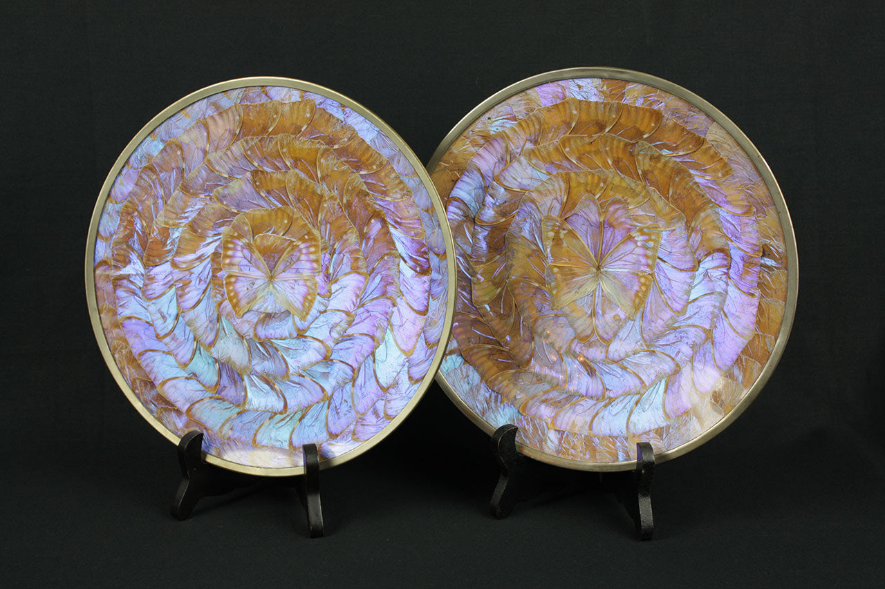 Very rare iridescent 'Blue Morpho' butterfly plates from Brazil, circa 1960