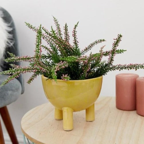 BLOOMINGVILLE - Yellow Footed Tripod Flowerpot