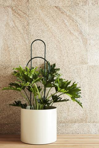 IVY MUSE Dot Plant Stake - Moss - Large