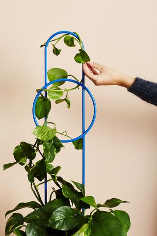 Ivy Muse Dot Plant Stake - French Blue