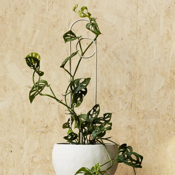 IVY MUSE Loop Plant Stake - Stone