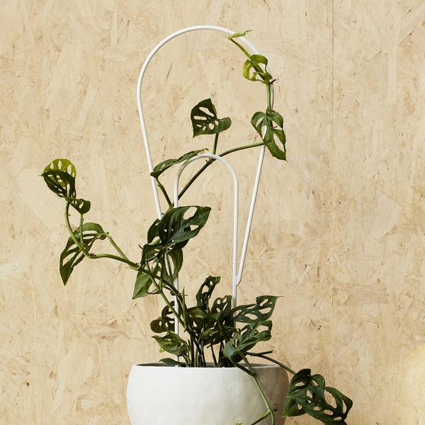 IVY MUSE Peacock Plant Stake - White