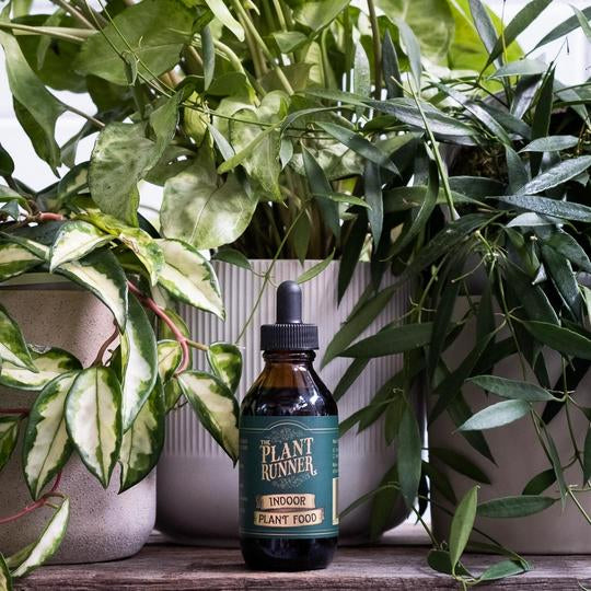 The Plant Runner - Indoor Plant Food 100ml