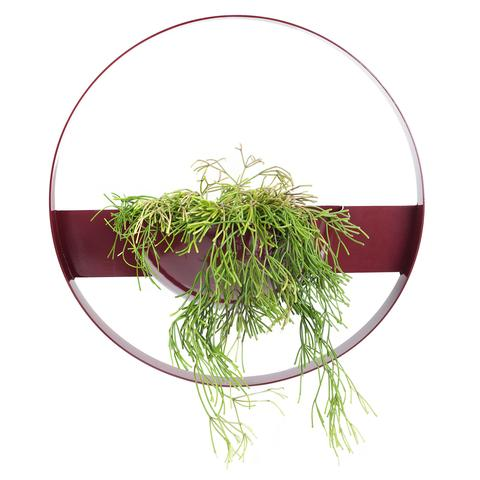 IVY MUSE Unity Wall Planter - Claret